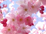 spring-flowers-pink-pretty-1