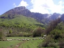 Bing Images L'Aquilla 2 Flock of sheep L'Aquilla, Italy - Roccaraso, Italy